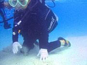 ブセナテラス前の海でジュニア体験ダイビン