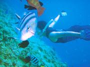 素潜りで海の生き物を探す