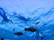 ブセナの海をスノーケルでお魚と泳ぐ