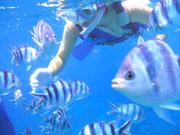 ブセナリゾートでスノーケルをしながらお魚に餌付け
